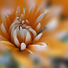 Orange Delight  by Ann Persse