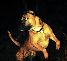 Hound of the Baskervilles by fenist
