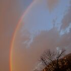 Rainbow in my backyard by elisab
