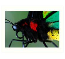 Cairns Birdwing II Art Print