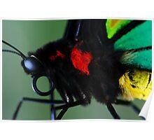 Cairns Birdwing II Poster