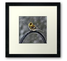 -Can Spring Be Far Behind? Framed Print