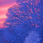 Winter Wonderland Sunset by Peter Thorpe