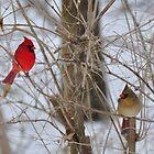 Cardinal couple by mltrue