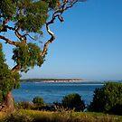 Eucalyptus, Inverloch, Victoria. by johnrf
