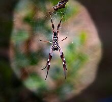 spider web by doug hunwick