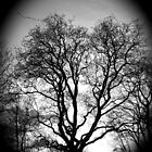 Treescape Silhouette by Stephanie Owen