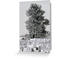 Pines in winter season Greeting Card