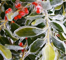 Holly Ice Tree by Rundis