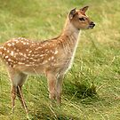 Bambi by Mark Hughes
