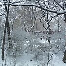 Snow in Central Park, NYC by RonnieGinnever