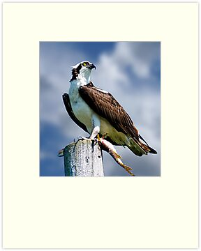 Osprey with Pike by Michael Cummings