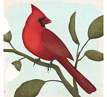 an american red cardinal by bymuravka