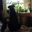 Watching birds on the grape arbor outside by Christianne White