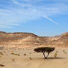 Lonesome tree in the desert by NicoleBPhotos