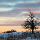 Sunrise Tree Silhouette by Geno Rugh