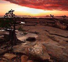 Bonsai Sunset by Andrew Brooks