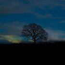 THAT TREE - RYE  by scarletjames