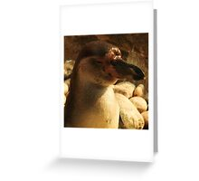 Pausing in the sun Greeting Card