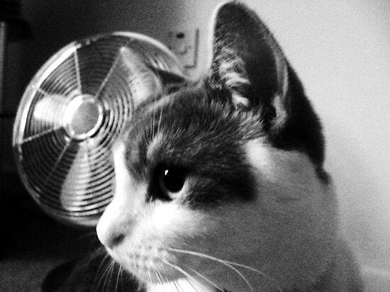Cat Noir by Ladymoose