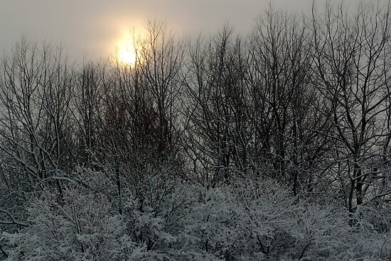 Faint winter sun over the ReedCorner by steppeland