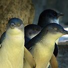 Little Penguins by Eve Parry