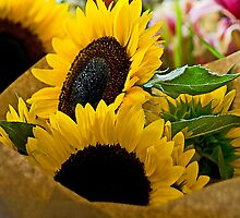 Sunflowers - - Cards by Maria A. Barnowl