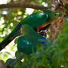 King Parrots at Mums? by Doug Cliff
