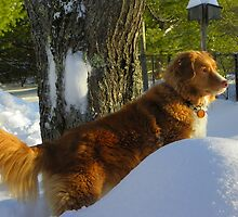 Dixie on Guard Duty by MaryinMaine