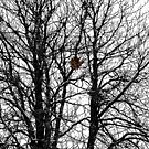 The Empty Nest by rocamiadesign