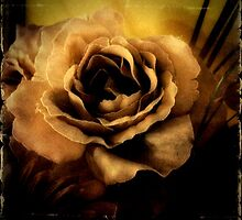 iPhone Sepia Imitation Rose by TeAnne
