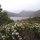 summer flower scenery by gaylene
