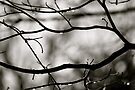 Cruel Winter, Don't Fence Me In! AKA Mother Nature's Barbwire by Ainsley Kellar Creations