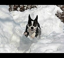 Playing in the Snow by Matt Becker