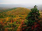 Arkansas Ozarks Rolling Hills by NatureGreeting Cards ©ccwri