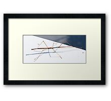 Stick Insect Framed Print