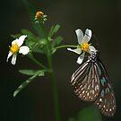 nectar-hungry II by Ryan Bird