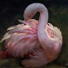 Flamingo by zzsuzsa