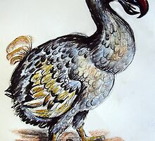 The Dodo by Adrian Symes