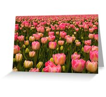 Candy Tulips Greeting Card