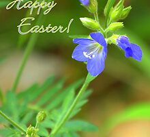 Blue Wildflower -  Happy Easter! by Diana Graves Photography