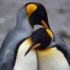 I Wuv You! (King Penguins, South Georgia) by Krys Bailey