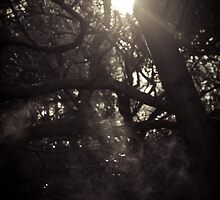 Light and Trees by Stacey Debono