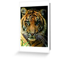 The Purrr...fect Cat Greeting Card