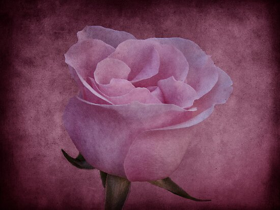 In the Pink by Sandy Keeton