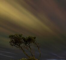 Night Winds by Brad McEvoy