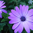 Purple Flowers in Trier. by cassidyfritts