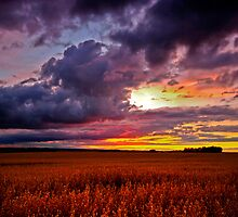 Wheatfield Sunset by James  Key