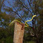 Green Tree Snake by NickBlake