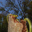 Green Tree Snake 2 by NickBlake